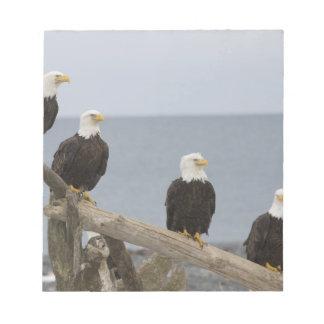 USA, Alaska, Kachemak Bay, Homer Spit. Bald Notepad