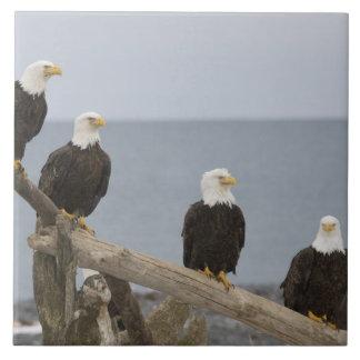 USA, Alaska, Kachemak Bay, Homer Spit. Bald Tile