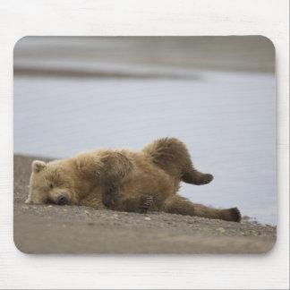 USA, Alaska, Katmai National Park, Brown Bear 2 Mouse Mat