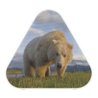 USA, Alaska, Katmai National Park, Brown Bear 3