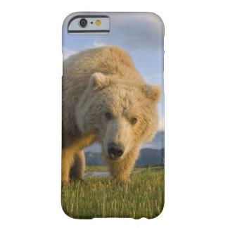 USA, Alaska, Katmai National Park, Brown Bear 3 Barely There iPhone 6 Case
