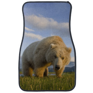 USA, Alaska, Katmai National Park, Brown Bear 3 Floor Mat