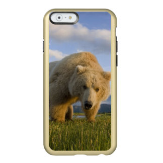 USA, Alaska, Katmai National Park, Brown Bear 3 Incipio Feather® Shine iPhone 6 Case
