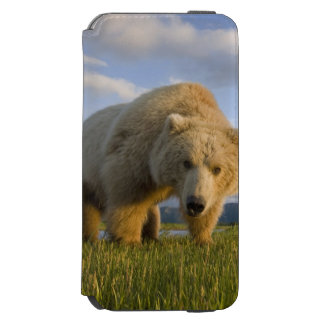 USA, Alaska, Katmai National Park, Brown Bear 3 Incipio Watson™ iPhone 6 Wallet Case