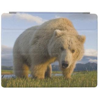 USA, Alaska, Katmai National Park, Brown Bear 3 iPad Cover