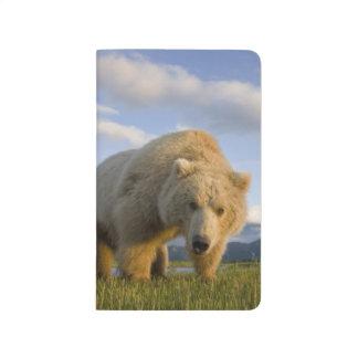USA, Alaska, Katmai National Park, Brown Bear 3 Journal