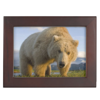 USA, Alaska, Katmai National Park, Brown Bear 3 Keepsake Box