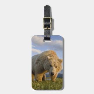 USA, Alaska, Katmai National Park, Brown Bear 3 Luggage Tag