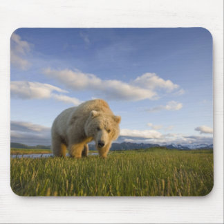 USA, Alaska, Katmai National Park, Brown Bear 3 Mouse Mat