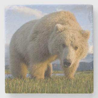 USA, Alaska, Katmai National Park, Brown Bear 3 Stone Coaster