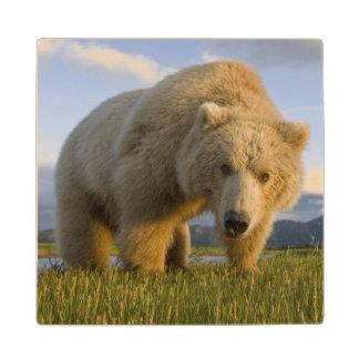 USA, Alaska, Katmai National Park, Brown Bear 3 Wood Coaster