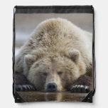 USA, Alaska, Katmai National Park, Brown Bear 4 Drawstring Backpacks