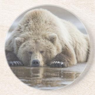 USA, Alaska, Katmai National Park, Brown Bear 4 Coaster