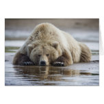 USA, Alaska, Katmai National Park, Brown Bear 4 Greeting Card