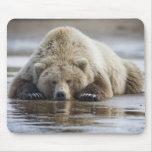 USA, Alaska, Katmai National Park, Brown Bear 4 Mouse Pads