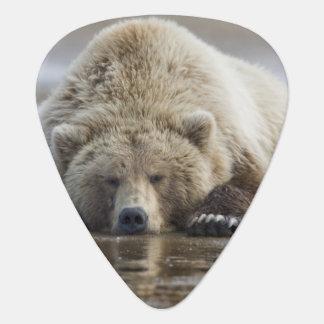 USA, Alaska, Katmai National Park, Brown Bear 4 Plectrum