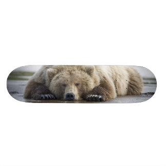 USA, Alaska, Katmai National Park, Brown Bear 4 Skate Boards