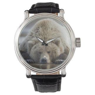 USA, Alaska, Katmai National Park, Brown Bear 4 Watch