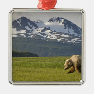 USA, Alaska, Katmai National Park, Brown Bear 5 Christmas Ornament