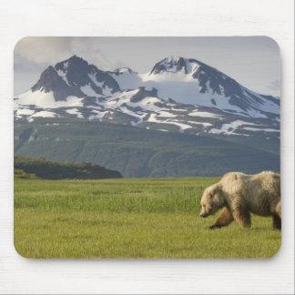 USA, Alaska, Katmai National Park, Brown Bear 5 Mouse Mat