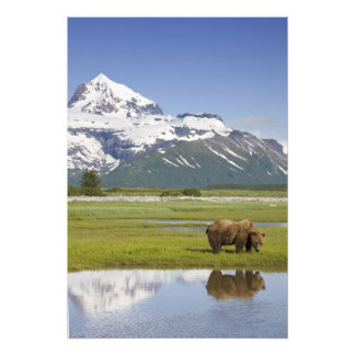USA, Alaska, Katmai National Park, Brown Bear Photo Print