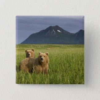 USA, Alaska, Katmai National Park, Brown Bears 15 Cm Square Badge