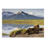 USA, Alaska, Katmai National Park, Brown Bears 2