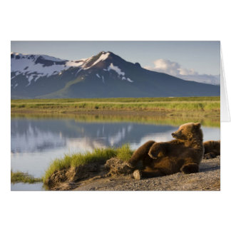 USA, Alaska, Katmai National Park, Brown Bears 2 Card