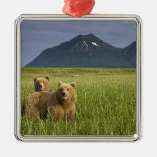 USA, Alaska, Katmai National Park, Brown Bears Silver-Colored Square Decoration
