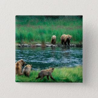 USA, Alaska, Katmai National Park, Grizzly 4 15 Cm Square Badge