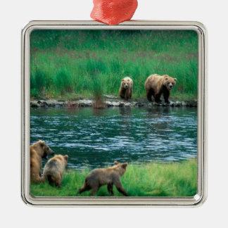 USA, Alaska, Katmai National Park, Grizzly 4 Christmas Ornament