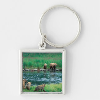 USA, Alaska, Katmai National Park, Grizzly 4 Silver-Colored Square Key Ring