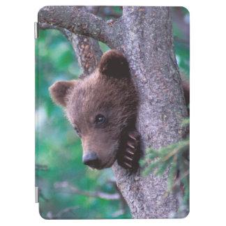 USA, Alaska, Katmai NP, Grizzly Bear cub iPad Air Cover