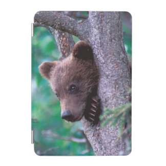 USA, Alaska, Katmai NP, Grizzly Bear cub iPad Mini Cover