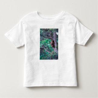 USA, Alaska, Katmai NP, Grizzly Bear cub Toddler T-Shirt