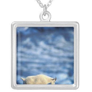 USA, Alaska, Kenai Fjords National Park, Silver Plated Necklace