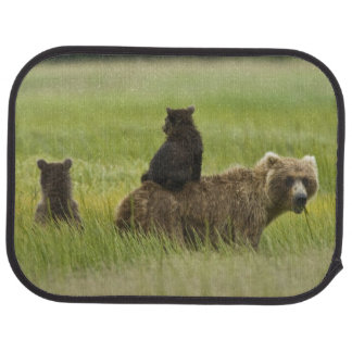 USA, Alaska, Lake Clark National Park. A Floor Mat