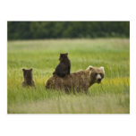 USA, Alaska, Lake Clark National Park. A Postcard