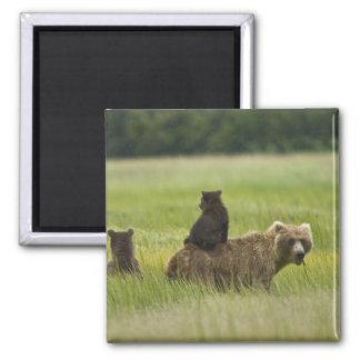 USA, Alaska, Lake Clark National Park. A Square Magnet