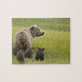 USA, Alaska, Lake Clark National Park. Grizzly Jigsaw Puzzle