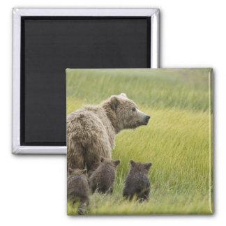 USA, Alaska, Lake Clark National Park. Grizzly Fridge Magnet