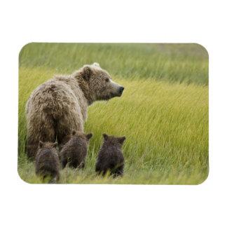 USA, Alaska, Lake Clark National Park. Grizzly Magnet