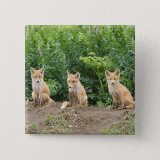 USA, Alaska, McNeil River. Red Fox. 15 Cm Square Badge