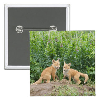 USA, Alaska, McNeil River. Red Fox. 2 15 Cm Square Badge