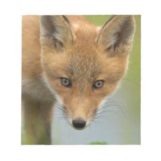 USA, Alaska, McNeil River. Red Fox. 4 Notepad