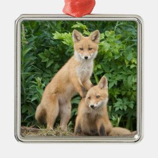 USA, Alaska, McNeil River. Red Fox. 5 Silver-Colored Square Decoration