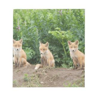 USA, Alaska, McNeil River. Red Fox. Notepad