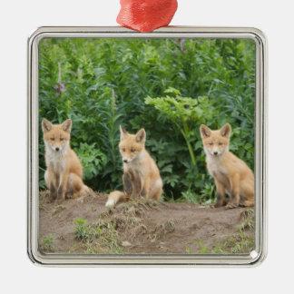 USA, Alaska, McNeil River. Red Fox. Silver-Colored Square Decoration