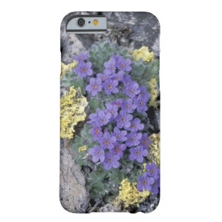 USA, Alaska National Wildlife Refuge (ANWR). 2 Barely There iPhone 6 Case