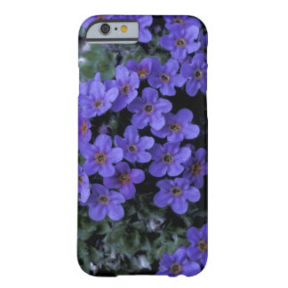 USA, Alaska National Wildlife Refuge (ANWR). Barely There iPhone 6 Case